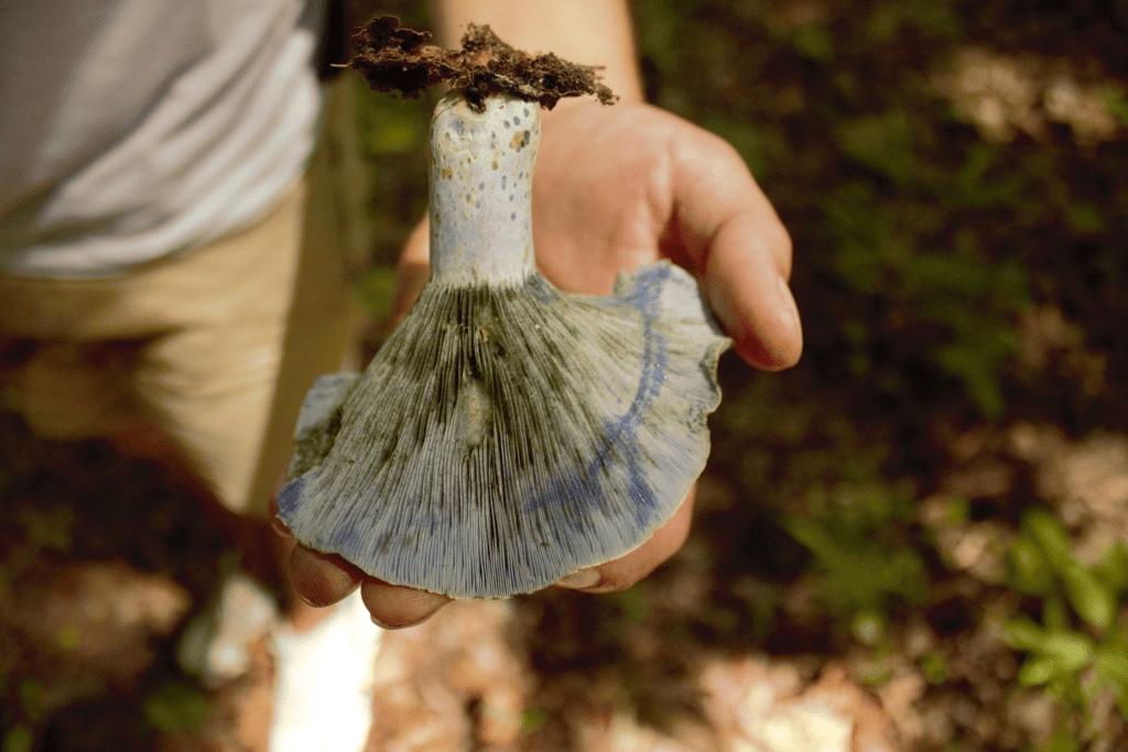 mushroom foragers of Georgia, a freshly picked mushroom in someone's hand