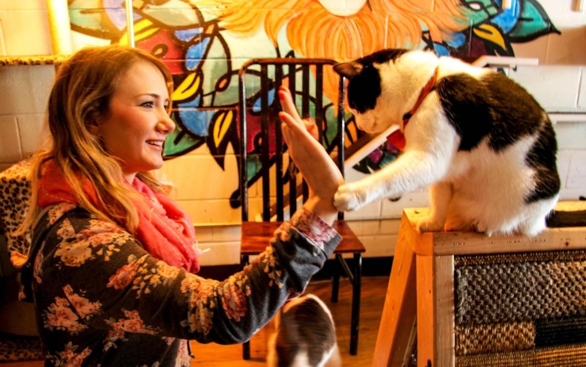 Cats Cafe Atlanta Georgia