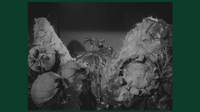 Audrey II from the 1960 low-budget cult classic movie Little Shop of Horrors (public domain)