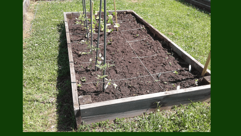 Vegetable bed at AW Matthews for article on fight against childhood obesity (photo courtesy of A.W. Matthews Boys and Girls Club)