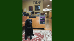 Oli the therapy dog greeted visitors at The Zone's front desk last Tuesday. (photo by Rebecca Gaunt)