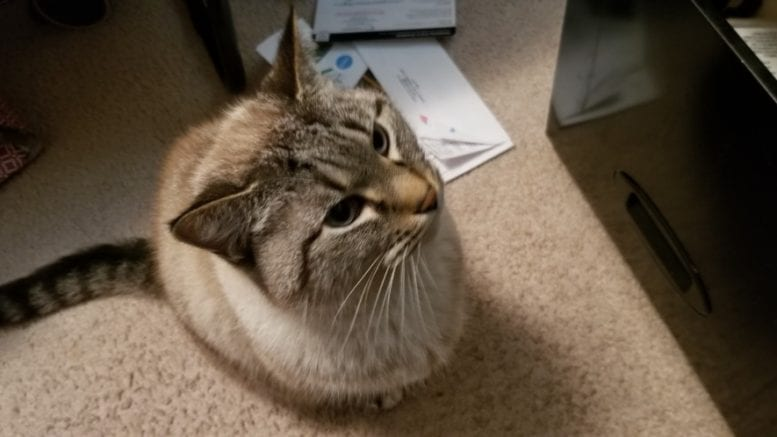 A cat at a file cabinet in article about Cobb County Kitties